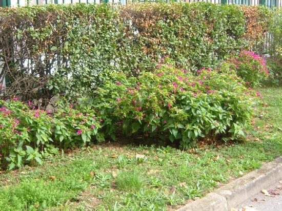 Plantation faite par un résident