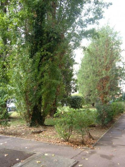 Encore des arbres